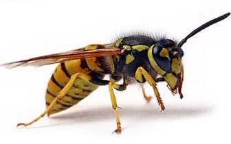Bee and Wasp Removal London