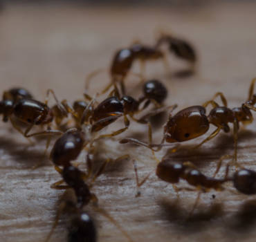 Ant Pest Control London