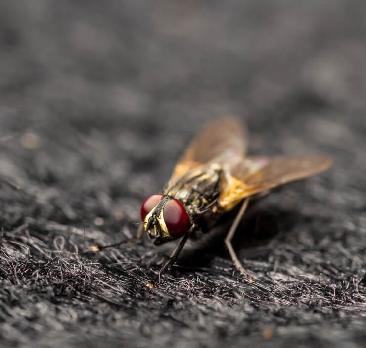 Fly Removal