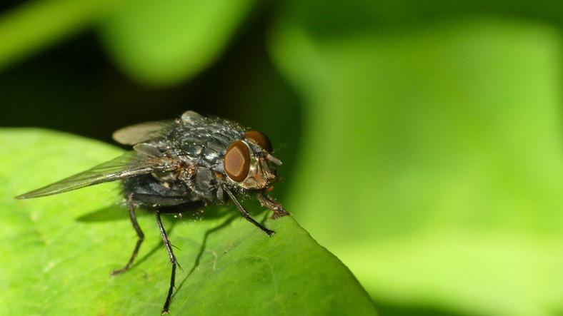 Pest Control West London